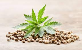 The ABC's of cbd seeds in Texas